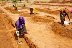 Women in Medo, Ethiopia tend to Moringa cabbage