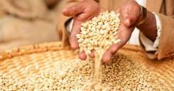 seeds_africa